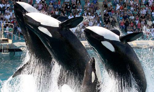 vacances-en-nord-Boulogne-nausicaa-orques