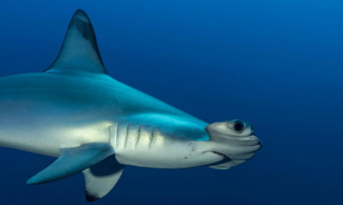 vacances-en-nord-Boulogne-nausicaa-requin